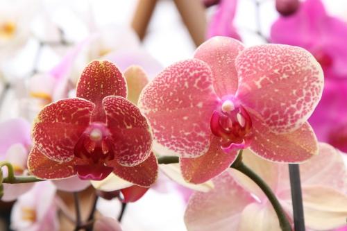 orchid-525197_960_720 (1).jpg