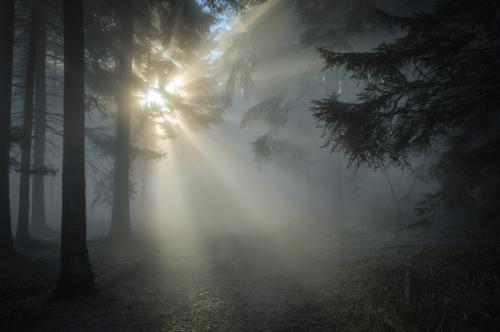 sunbeam-1547273_1280.jpg