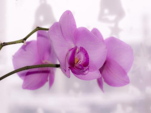 flower-1974573_960_720.jpg